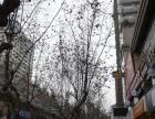 北碚天奇广场,胜利路步行街门面出租