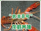 2016年龙虾,泥鳅种苗开始预订啦