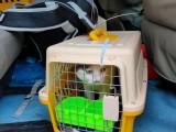 温州宠物托运一体的活体托运公司