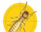 清远地区免费白蚁检测专业技术灭杀白蚁白蚁防治