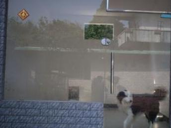 佛山宠物训练学校狗狗训犬基地可上门接送