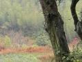 丽水市300亩林地低价出租
