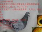 长期出售公棚鸽,特比鸽本人广东潮州,店在潮州