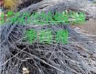沧州二手废电线电缆回收