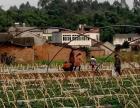 七彩鲜果加盟 种植养殖 投资金额 1-5万元