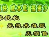 濮阳霞康土元养殖