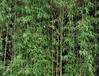 武汉园林绿化用苗草花基地金边麦冬工程庭院小区别墅时令花卉草花