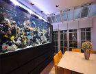 广东湛江观赏鱼缸订做厂家,高质量高技术高品质