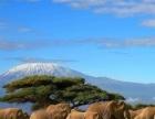 青岛森林野生动物园一日游【民安国旅】