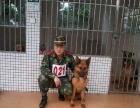 宠物狗工作犬科目指导训练