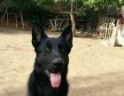 宠物训练价格3000,本犬舍还常年招收训犬学员