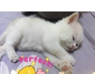 可爱猫咪500元求领养