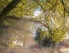 【秋·摄】赏深山银杏+惊险玻璃天梯金子山地道牛杂
