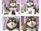 天津市区哪里有宠物店 天津犬舍