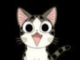 美短甜甜私房公猫找女友