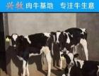 山西肉牛市场 山西省肉牛的价格