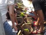 上海农家乐吃住两日游 五彩番茄 葡萄西瓜 钓鱼烧烤吃土菜
