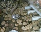 果园养殖刺猬大量出售