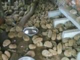 海狐鼠刺猬平价出售