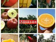 水果要如何选购 农特产好吗