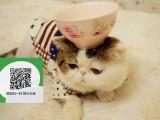 新乡哪里有加菲猫出售 新乡加菲猫价格 加菲猫多少钱