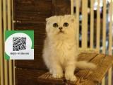 镇江哪里有宠物猫出售,镇江哪里有卖纯种折耳猫价格