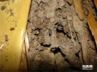 东莞石龙防治白蚁方法,石排白蚁防治,横沥白蚁防治公司