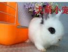 ND萌人、动人、可人的宠物兔兔,垂耳兔,视频挑选