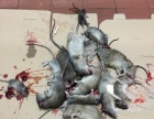 永信 白蚁防治 杀虫 灭鼠