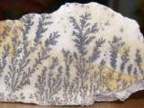杭州西湖哪里收购化石