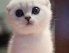 凯斯猫舍 活动中