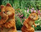 转让正版加菲猫dd,红虎斑异短