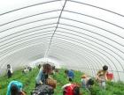 合肥长丰重点草莓基地,欢迎采摘奶油草莓 优惠多多