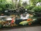 上海品牌鱼缸定制,观赏鱼专卖