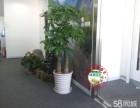 室内绿化植物租摆花卉盆栽租赁