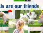 线上美国小学寒假小班课 美国外教远程互动教学