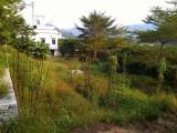從化江埔雙鳳高速出口附近省道邊100平方宅基地轉讓