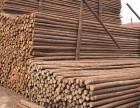 沧州杉木杆批发市场