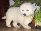 哪里卖大白熊 哪里卖大白熊 哪里卖大白熊哪里卖
