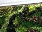 珠海鲜花工程 假花工程 绢花工程 植物墙工程