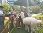 上海静安区承租驼羊-羊驼借租-草泥马出租-广告策划展示
