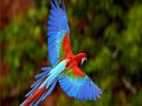 重庆梁平本地出售观赏鸟种类繁多