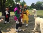 上海长宁区荷兰猪出租-羊驼出租-矮脚马转租-展览展示庆典暖场