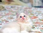 深圳买卖宠物地方 深圳哪里卖健康布偶猫价格便宜
