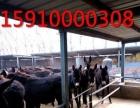 出售肉牛犊黄牛利木赞肉羊白山羊黑山羊小驴驹种驴肉驴