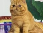 广州哪里有卖虎斑猫价格多少 虎斑猫有哪些 虎斑猫怎么挑选