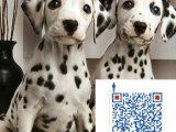 哪里有卖斑点狗 斑点狗健康保证