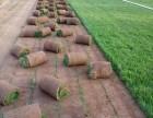 房山园林绿化公司承接别墅绿化及出售高羊茅早熟禾草坪运输铺种