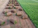 房山園林綠化公司承接別墅綠化及出售高羊茅早熟禾草坪運輸鋪種