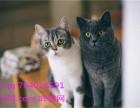 晖猫网,可爱猫咪信息,可爱猫咪品种,可爱猫咪价格